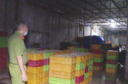 Vũng Tàu: Hãi hùng cơ sở ngâm cá bằng hóa chất độc hại - 1